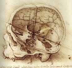 da vinci skull 1