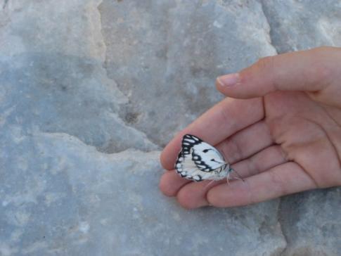 butterfly1362938136