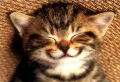 smiling kitty face 1