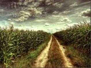 road behind